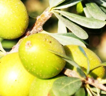 About Argan
